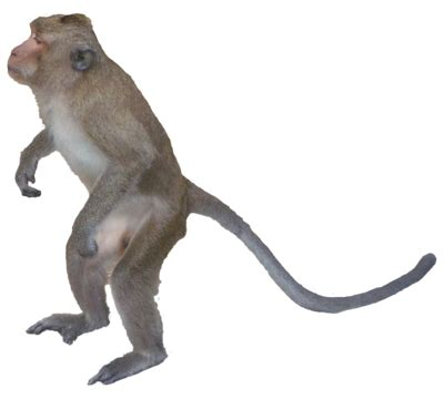 monkey png images
