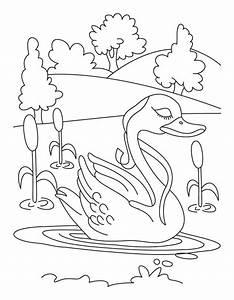 Swan in lake coloring page | Download Free Swan in lake ...