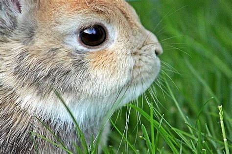 dwarf rabbit easter  photo  pixabay