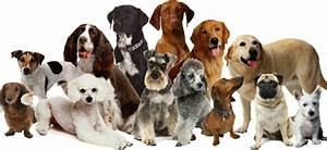 """Panarea, è allarme cani """"SOS"""" al sindaco Notiziario delle isole Eolie # Eolie news"""