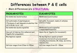 Chart of Difference Between Prokaryotic and Eukaryotic