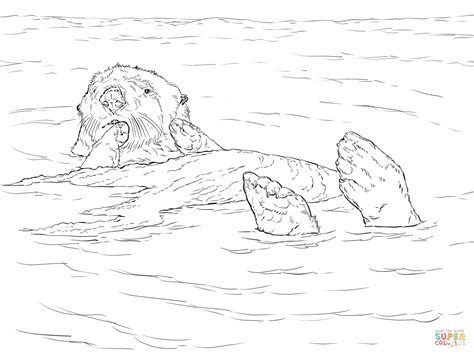 sea otter floating coloring page  printable coloring