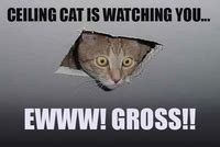Ceiling Cat Meme - ceiling cat image gallery sorted by low score know your meme