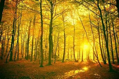 Forest Landscape Background Desktop Wallpapers Nature Backgrounds