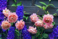 Rosen Und Stauden Kombinieren : rosenbeet mit lavendel gestalten das sollten sie bedenken ~ Orissabook.com Haus und Dekorationen