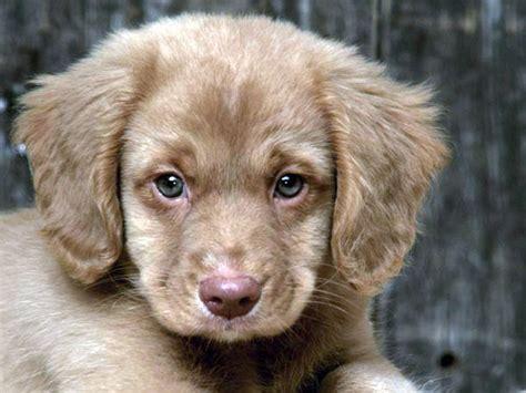 картинки и фотографии щенков разных пород собак