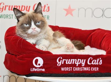 Grump Cat Meme Generator - meet concerned kitten the grumpy cat rival taking the web by storm tech life style