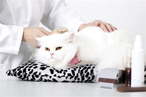 cat grooming pet grooming jacksonville fl cat grooming