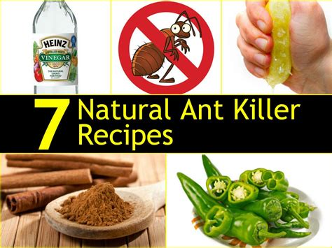 Control Ants In Kitchen by 7 Natural Ant Killer Recipes Handy Diy