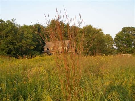 Mesic Tall Grass Seed Packet