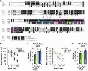 Overexpression Of The Hbi1 Homologs Bee2 And Cib1