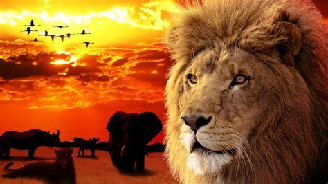 The Big Five Africa amazing animals YouTube