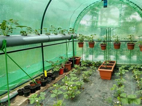 was kann in ein gewächshaus pflanzen gew 228 chshaus bepflanzen anleitung f 252 r den gem 252 seanbau