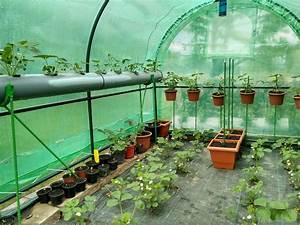 Einfaches Gemüse Für Den Garten : gew chshaus bepflanzen anleitung f r den gem seanbau ~ Lizthompson.info Haus und Dekorationen