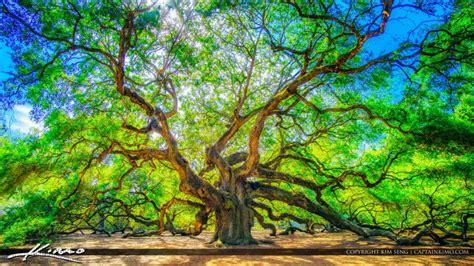 legendary angel oak tree  south carolina