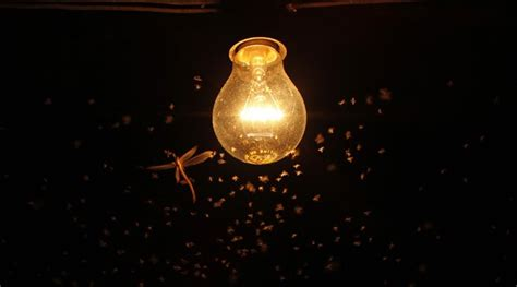 scientific study reveals which light bulbs attract fewest