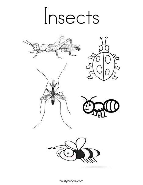 insects coloring page  twistynoodlecom animal
