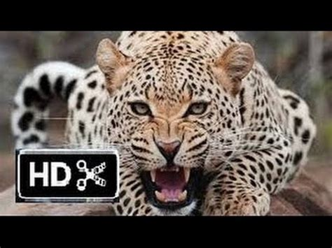 National Geographic  Wild Animals Fighting Hd Youtube