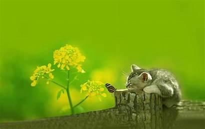 Widescreen Desktop Wallpapers Background Cat Butterfly Kitten