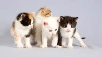 cats for free cat wallpaper 10
