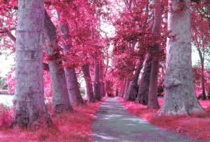 pink color images pink trees wallpaper and background photos 23859329