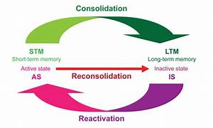 The function of memory reconsolidation as a function of ...