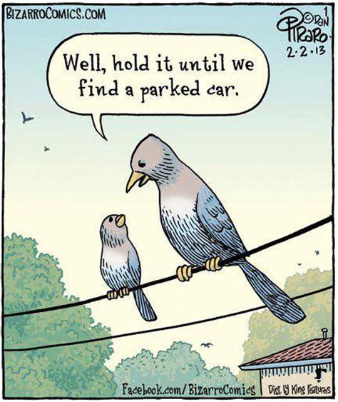 Bird Shit Meme - bird humor funtime birdy parrot lovers blog
