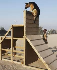 German Shepherd Military Attack Dog