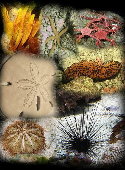 difference  phylum annelida  echinodermata