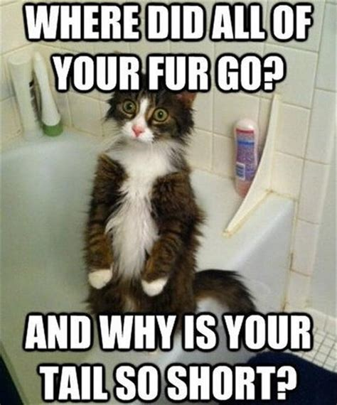 Random Cat Meme - lol cats 14 dump a day