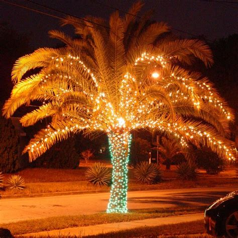 christmas lights in trees christmas lights on palm trees are a great way to show