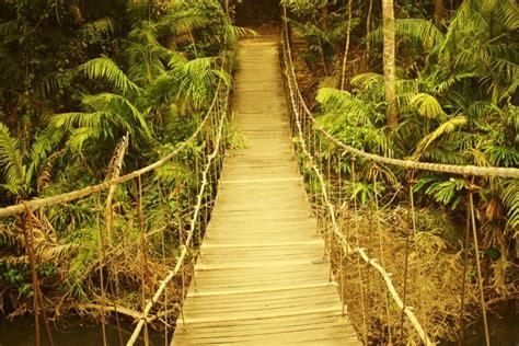 si鑒e suspendu ikea toile imprimée pont suspendu dans jungle toile photo eu