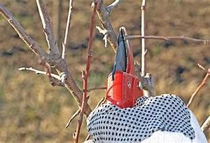 Wann Müssen Apfelbäume Geschnitten Werden : apfelb ume schneiden kraut r ben ~ Lizthompson.info Haus und Dekorationen
