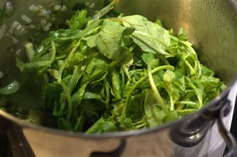 cuisiner des fanes de radis soupe verte de fanes de radis rosecardaillac cuisinier conseil francis cardaillac