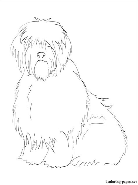 english sheepdog coloring page coloring pages