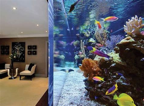 Images Of Most Expensive Aquarium Fish In The World Summer