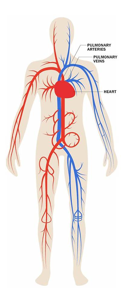 Cardiovascular Stress Effects Labels System