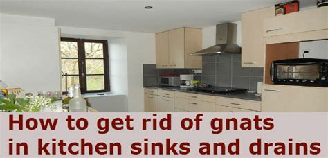 how to get rid of gnats in kitchen   how to get rid of