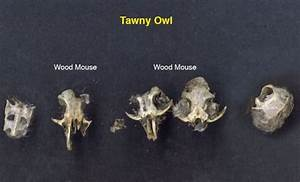 Emsworth Wildlife Diary