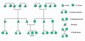 Anthropological Family Tree Diagram -
