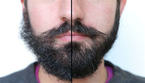 bearded shedding tips 10 facts about the beards that every must about