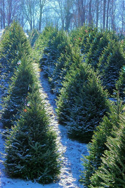 best nc christmas tree farm best 25 tree farms ideas on