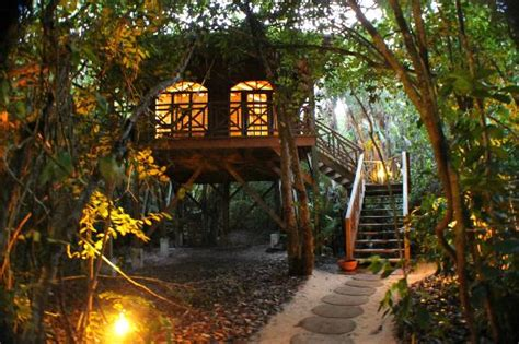Tree House In The Evening  Picture Of Hamanasi Adventure
