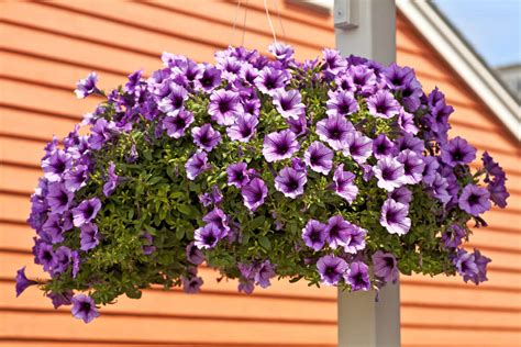 hanging flower baskets 70 hanging flower planter ideas photos and top 10