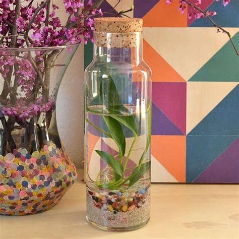 easy water terrariums bottled water plants dream