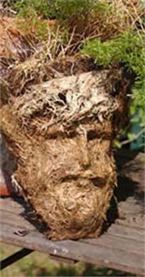 jesus in asparagus fern roots neatorama