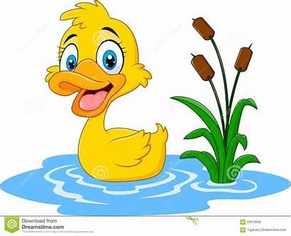 Duck Clipart Water Illustration Floats Vector Clip