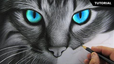 draw realistic cat  beginners fur drawing