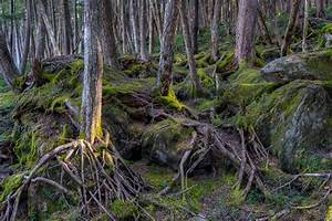 12 Rainforests That Aren U0026 39 T On The Equator
