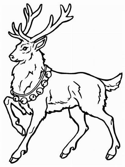 Deer Coloring Pages Printable Christmas Animal Santa